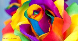 La psicologia dei colori - Spotvision Asti